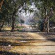 Foggy Morning at Govardhana Hill